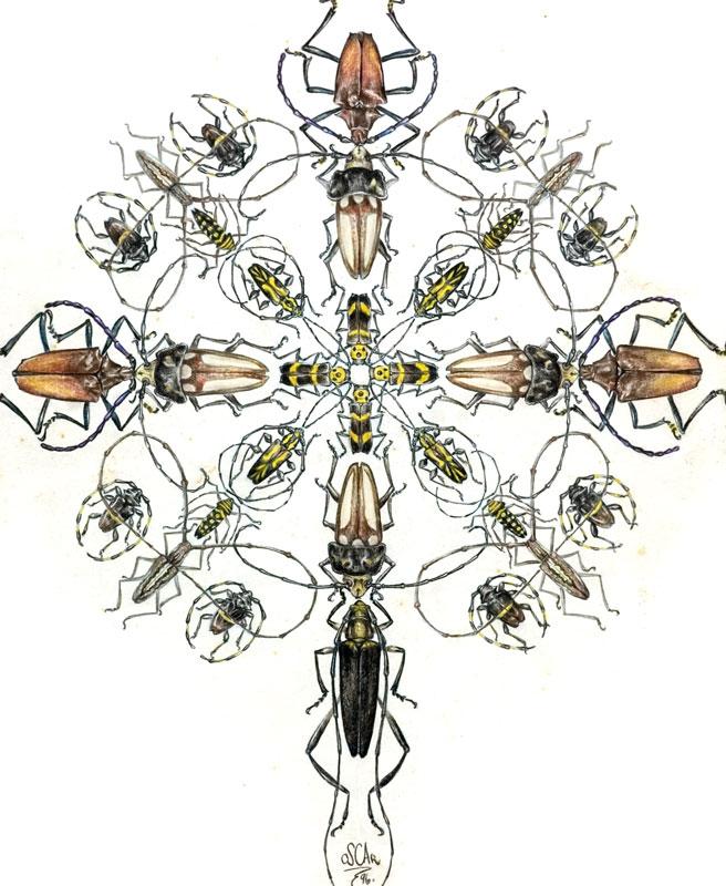 cerambycidae-arabesque-oscar-blanco